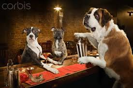 Dogs at a Bar